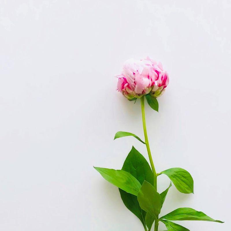 お花のサブスクとエシカルな取り組みの写真
