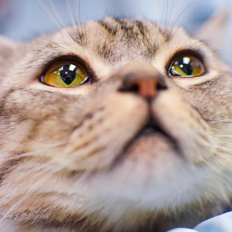 初心者でもできる猫カフェ攻略法!7のつのルールの写真